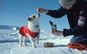 calgary dog vet